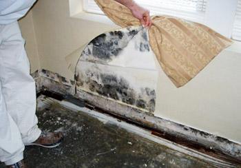 Как избавиться от грибка в квартире